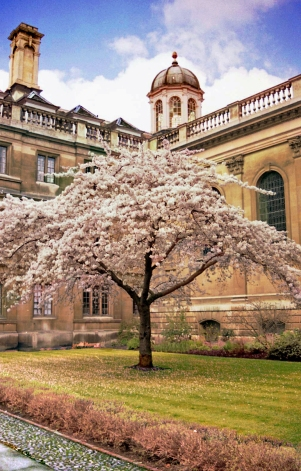 Blossoms-Cambridge