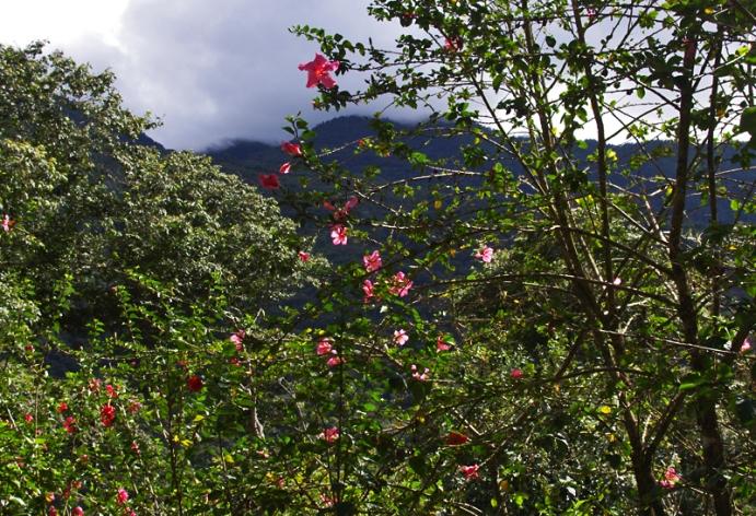 Blossoms-Peru