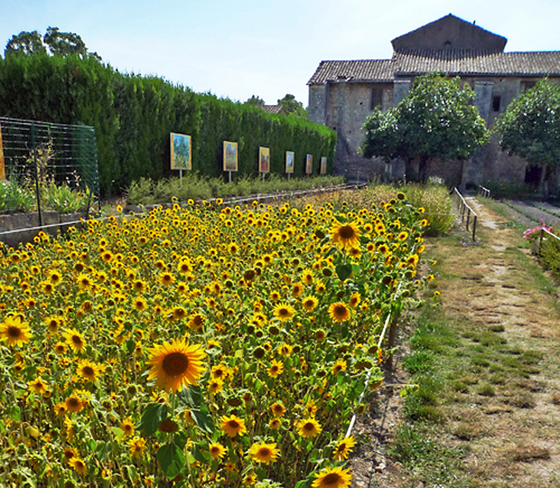 vincent van gogh sunflowers essay