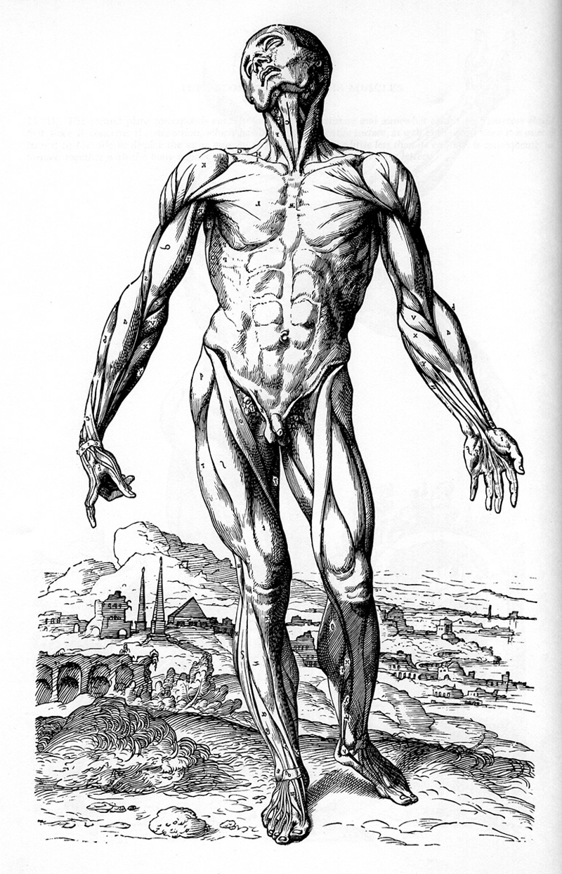 Celebrating the Quincentenary of Andreas Vesalius | thechangingpalette