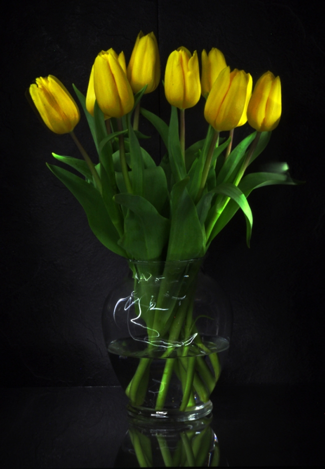 yellow tulips i