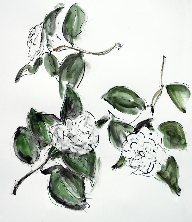 camellia P&I ii