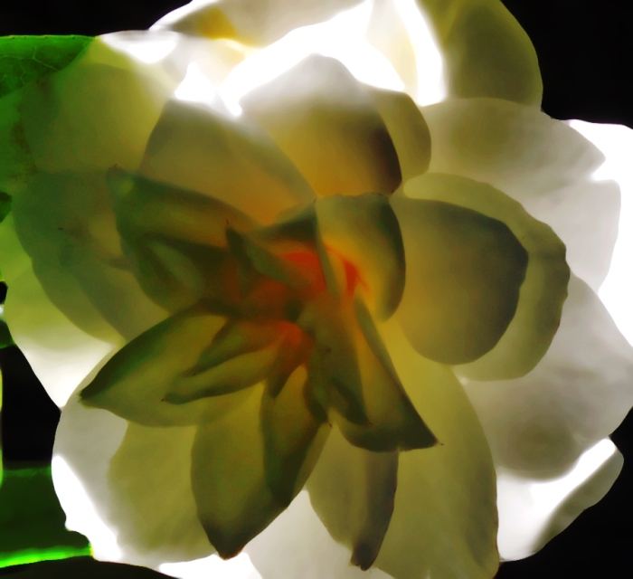camelliabstract iv