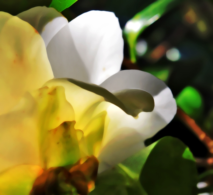 camelliabstract v
