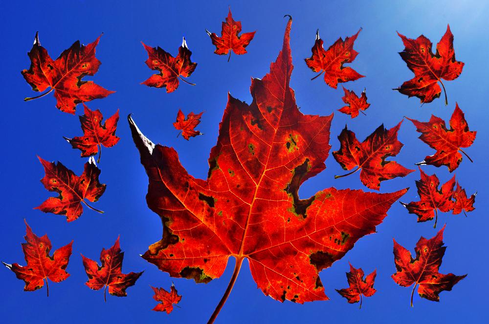 fall-ii
