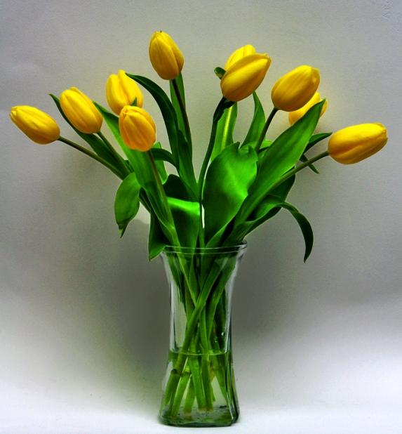 tulips-ix